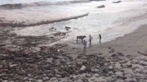 Los animalitos fueron rescatados por vecinos y agentes municipales.