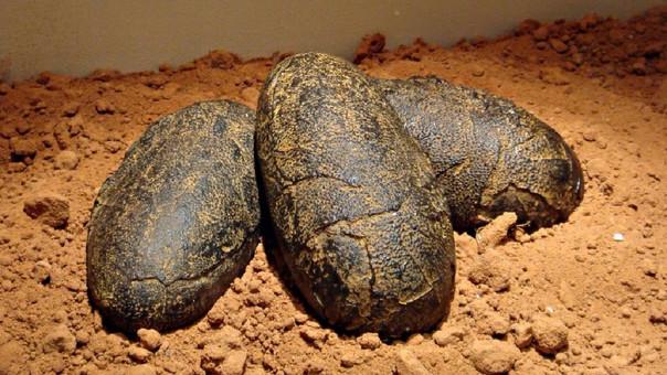 China es uno de los países con mayor número de restos de dinosaurios.