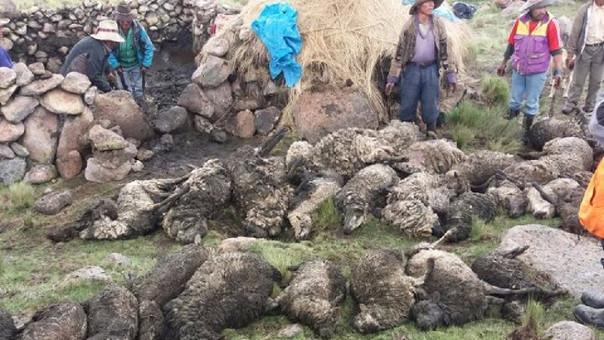 34 ovejas y un caballo fueron impactados por el rayo en Livitaca