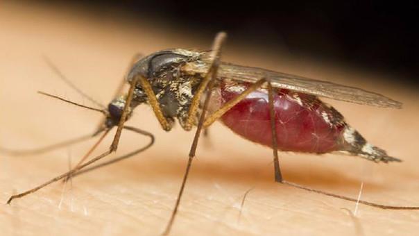 El mosquito transmisor de la enfermedad es el aedes Aegypti.