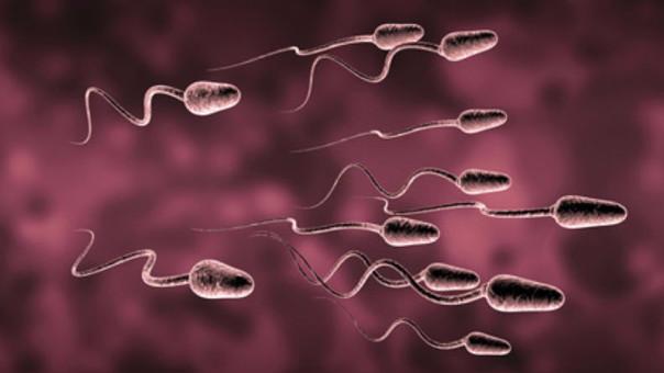 Científicos convierten el semen en una arma para combatir el cáncer ...