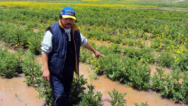La agricultura fue uno de los sectores más golpeados por El Niño costero.