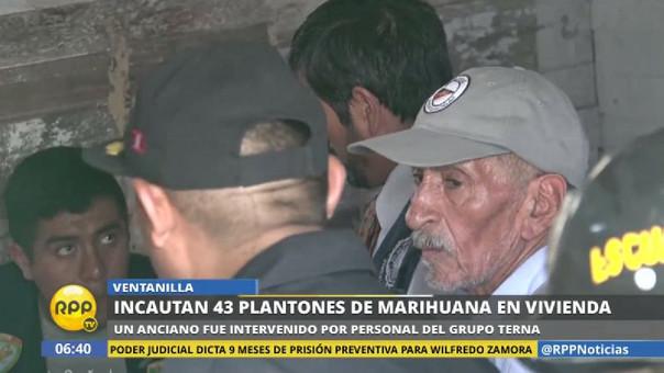 El anciano reconoció que sembró la marihuana, pero dijo que pensaba que era huacatay.