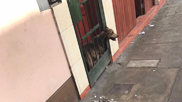 Mascota es encerrada en la puerta de una casa