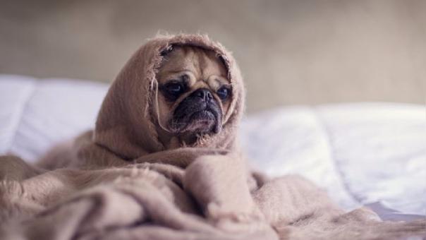Los gruñidos de los perros pueden ser lúdicos, de vigilancia o de amenaza.