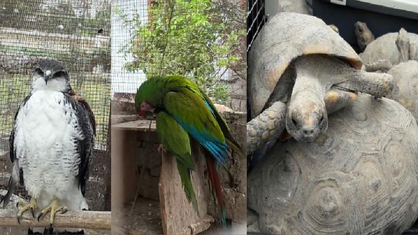 Animales recuperados