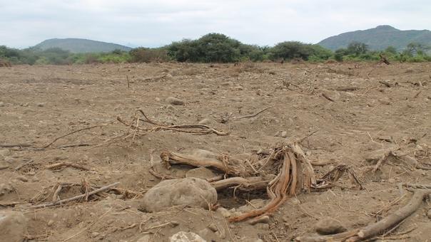 Deforestación en Pampa Yaipón