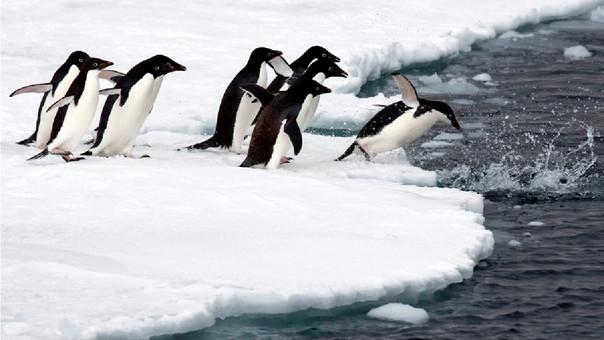 Si la cuarta parte de la Antártida se derrite generaría que muchas especies migren hacia lugares más fríos.