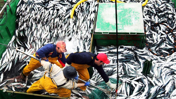 Sector pesca creció 280% en mayo, informó el INEI.