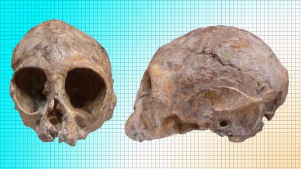 Cráneo del Nyanzapithecus alesi