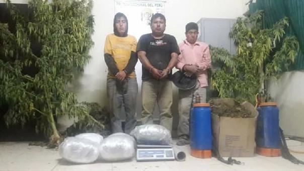 detenidos en Morropón con plantones de marihuana