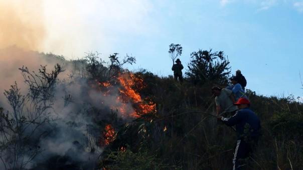 Incendio forestal afectó Fundo.