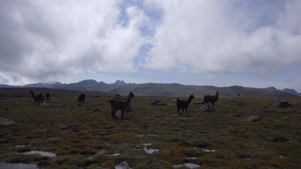 Bajas temperaturas en Andahuaylas.