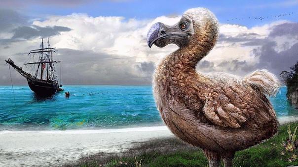 El pájaro se extinguió tras la llegada de cazadores y exploradores a la isla Mauricio.