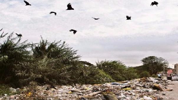 Gallinazos en Chiclayo