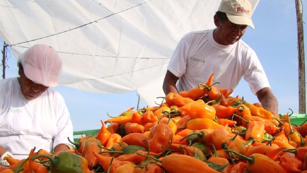 Consumo per cápita anual de ají fresco en Perú es de 4.75 kilos y en México de más de 8 kilos.