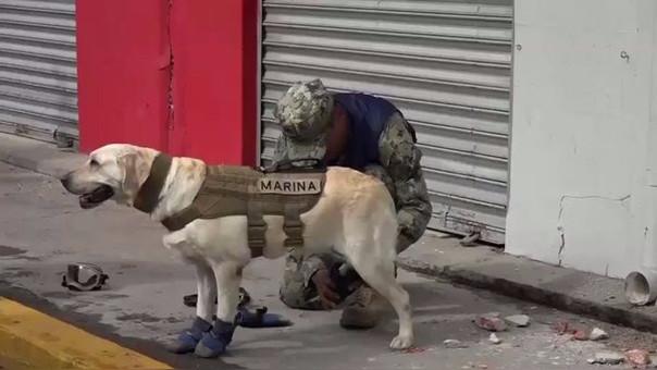 Ella es Frida la perra rescatista que apoya en las labores de rescate.