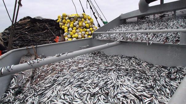 Soldi estimó que el sector pesca será la actividad productiva que empujará más el Producto Bruto Interno (PBI) peruano el 2017.
