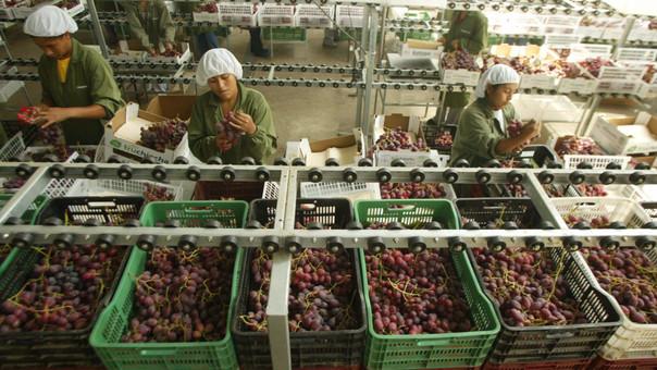 Se busca lograr la meta de llegar a 10 mil millones de dólares en agroexportaciones.