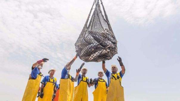 El Foncopes establecía límites máximos de captura por embarcación para la pesca industrial de anchoveta.