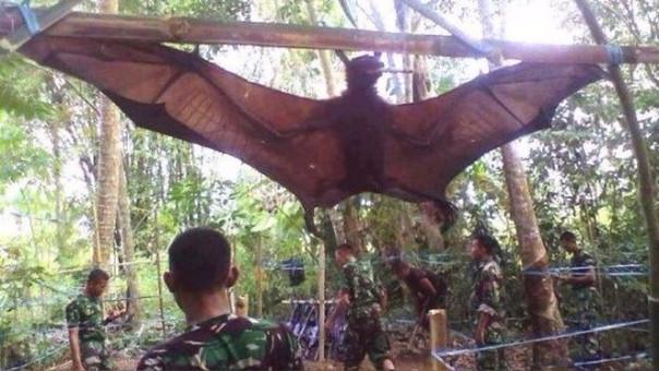 Soldados filipinos capturan murciélago de 2 metros