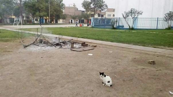 Los defensores de los gatitos indican que de los 70 gatos que había en el parque ahora solo hay 12.