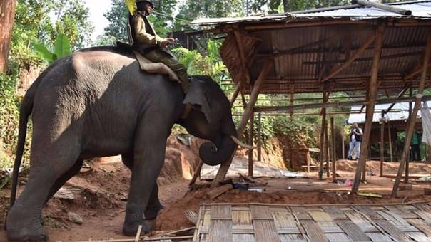 Utilizan elefantes para recuperar bosque en la India