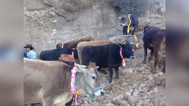 Jauja: Vacas robadas