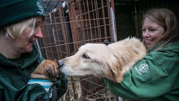 Se calcula que solo en Corea del Sur existen 17 mil granjas de carne de perro.