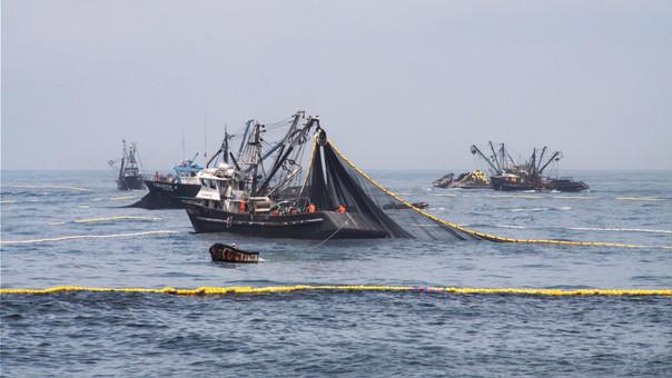 Exportaciones del sector pesquero significaron el 8.6% de las exportaciones totales del Perú.