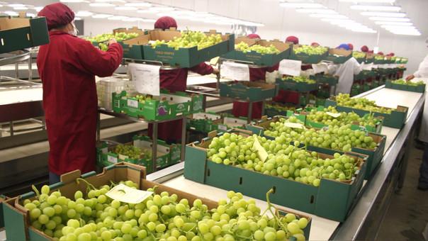 El Minagri estimó que a finales de este año las exportaciones agrarias superarían los US$ 6,000 millones.