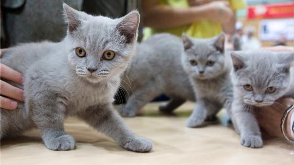 Los gatos dominan el mundo