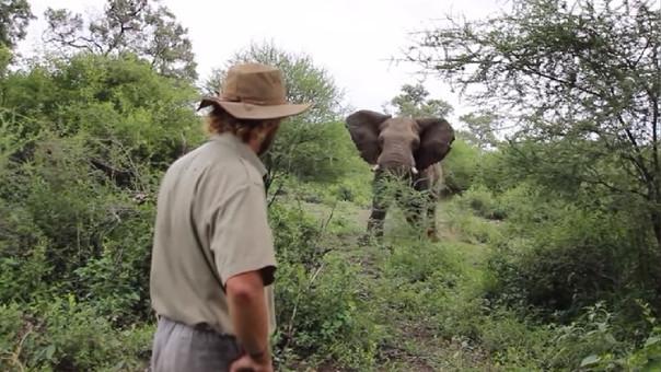 Paró la embestida de un elefante con la mirada