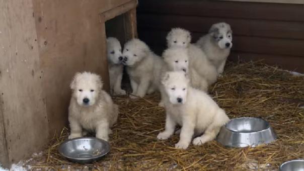 Ministerio de Defensa de Rusia saludó a sus ciudadanos con imágenes de tiernos perritos