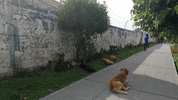 Jauría de perros en Cercado de Arequipa