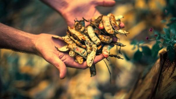 Bosques secos de Perú: esperanza para la conservación en el ACP Milpuj La Heredad