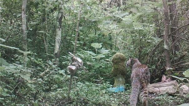 Milpuj La Heredad: felinos y aves captados por cámaras trampa en bosques secos de Perú