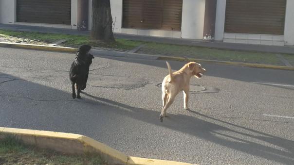 Perros callejeros en Cercado de Arequipa