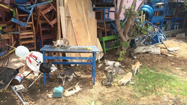 Gatos convierten en guarida colegio en Chimbote