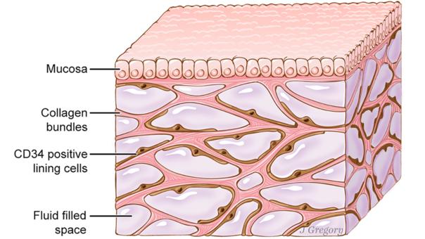 El intersticio bajo la capa superior de la piel.