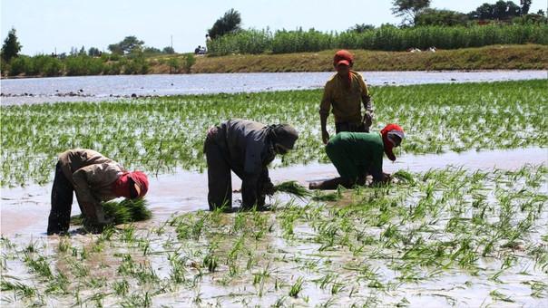 Las facilidades financieras para las mujeres y varones del campo, afectados por El Niño, se han ampliado por 7 meses más.