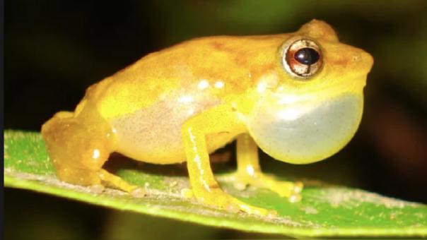 Los sonidos de la biodiversidad: el monitoreo acústico en la investigación científica