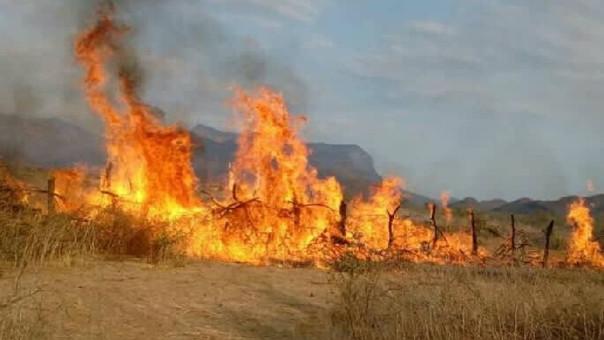 Hasta el momento se perdieron 3 400 hectáreas