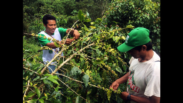 ACR Urusayhua: Machiguengas lideran conservación frente al avance del narcoterrorismo