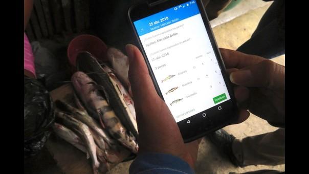 Ciencia ciudadana: nuevo app estudiará en tiempo real a peces de la Amazonía