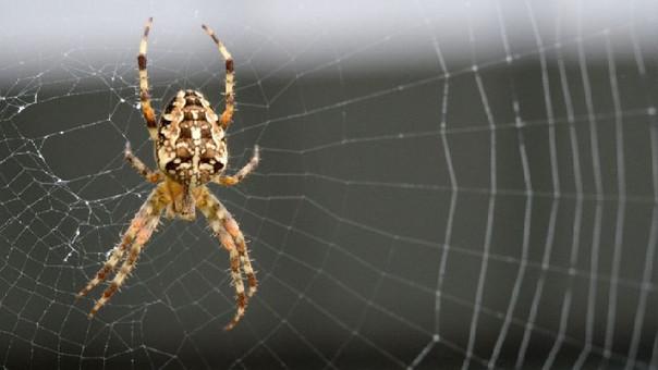 Las arañas han vivido en nuestro planeta millones de años antes de la humanidad aparezca.
