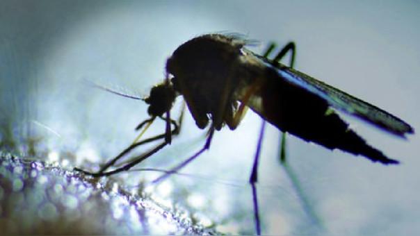 Vector del zika