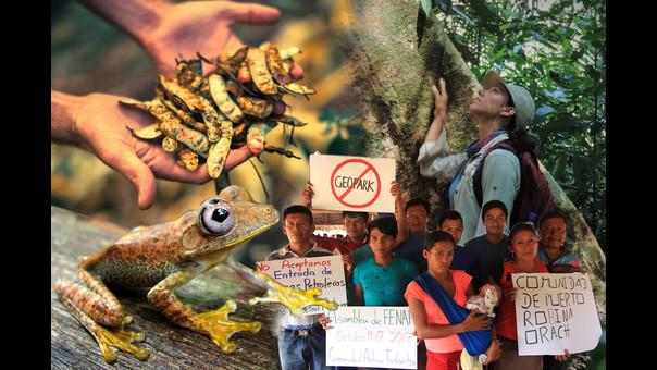 Cinco historias ambientales positivas para el Perú en este 2018