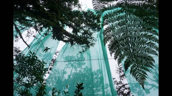 Experimento en bosque nublado del Cusco permite conocer efectos del cambio climático