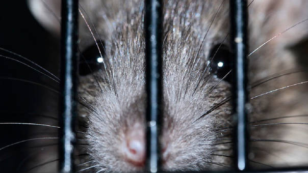 Esto pasa cuando una rata se mete en un cajero automático — India